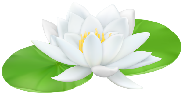 Water Lily clipart #4, Download drawings