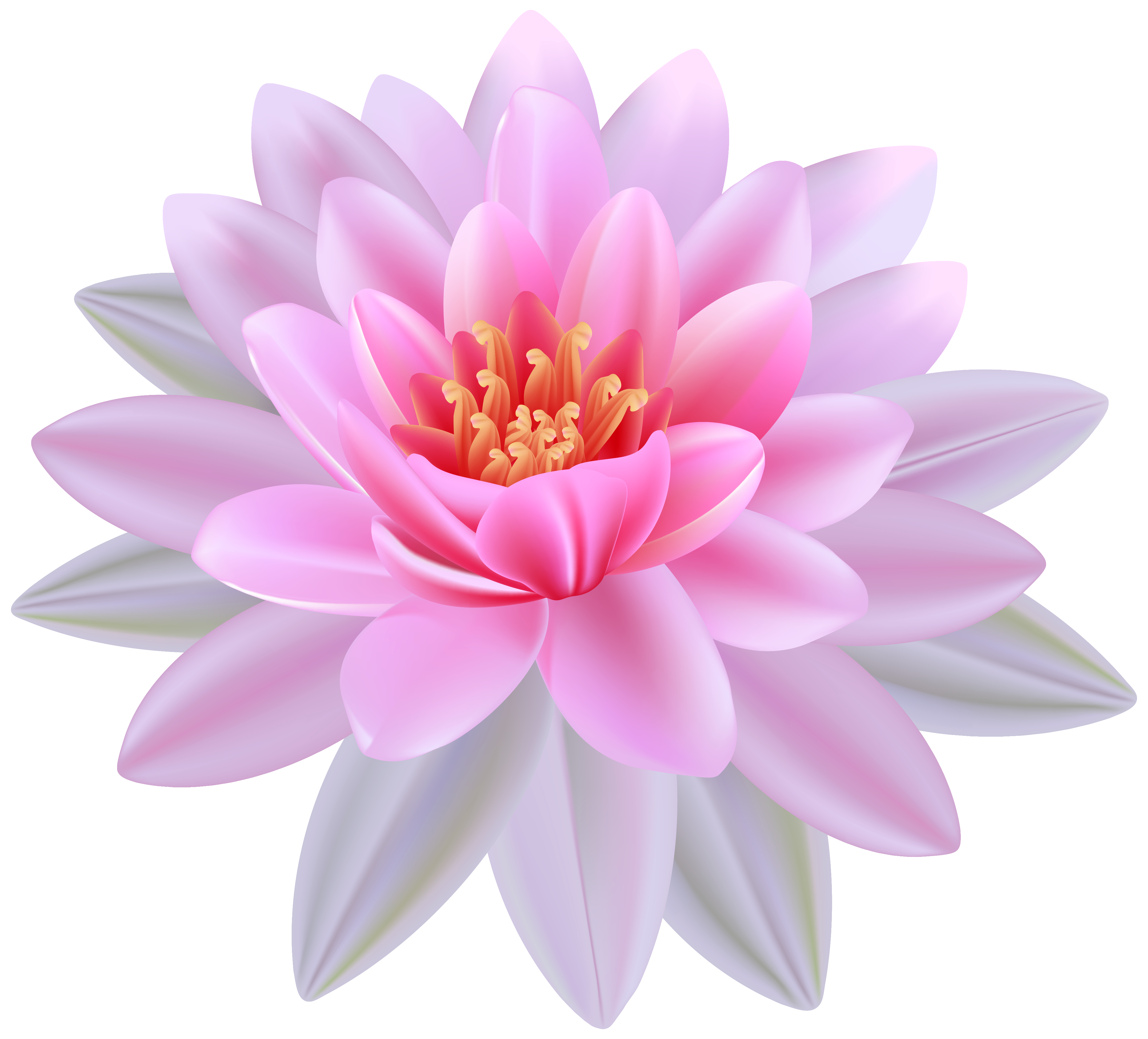 Water Lily clipart #1, Download drawings