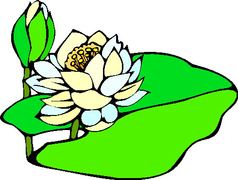Water Lily clipart #8, Download drawings