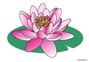 Water Lily clipart #18, Download drawings