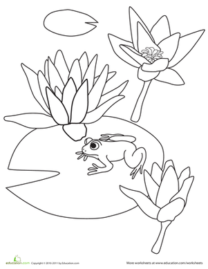 Water Lily coloring #1, Download drawings
