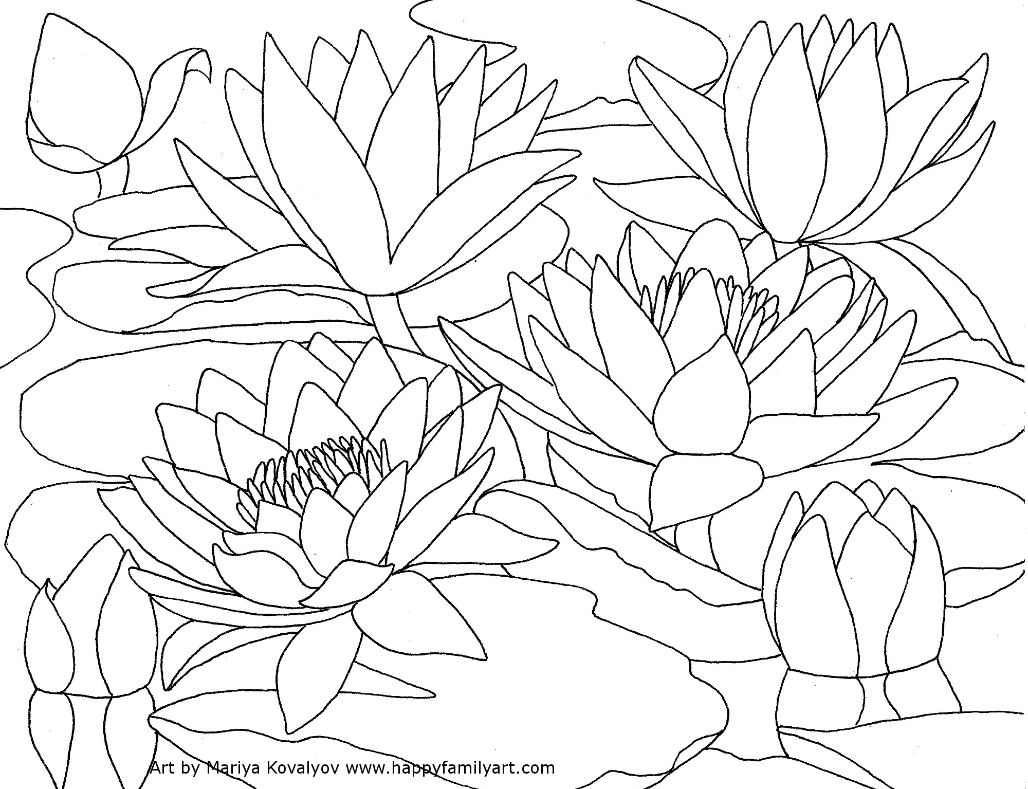 Water Lily coloring #2, Download drawings