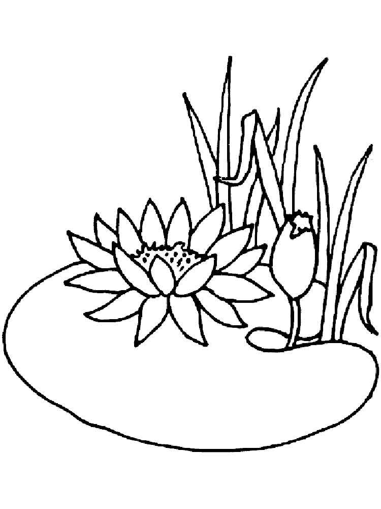 Water Lily coloring #5, Download drawings