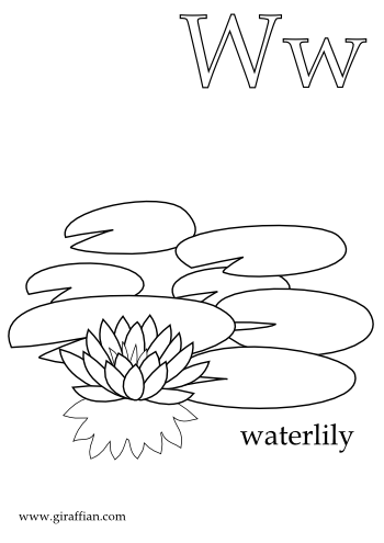 Water Lily coloring #10, Download drawings