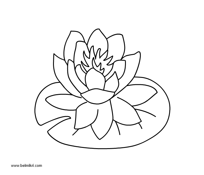 Water Lily coloring #16, Download drawings