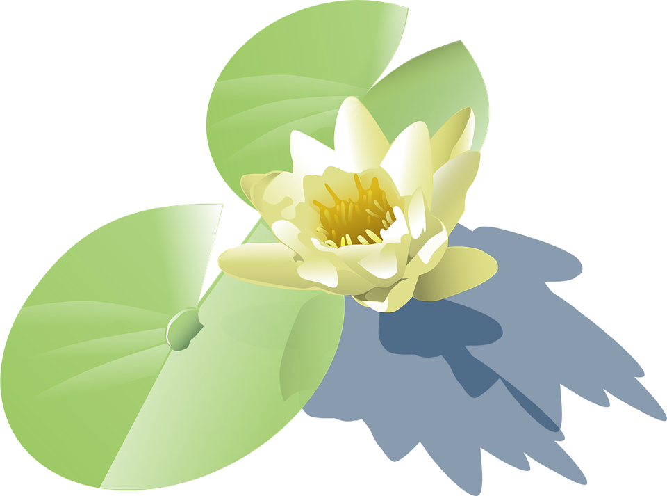 Water Lily svg #7, Download drawings