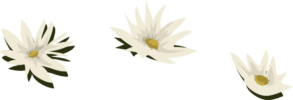 Water Lily svg #10, Download drawings