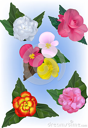 Wax Begonia clipart #12, Download drawings