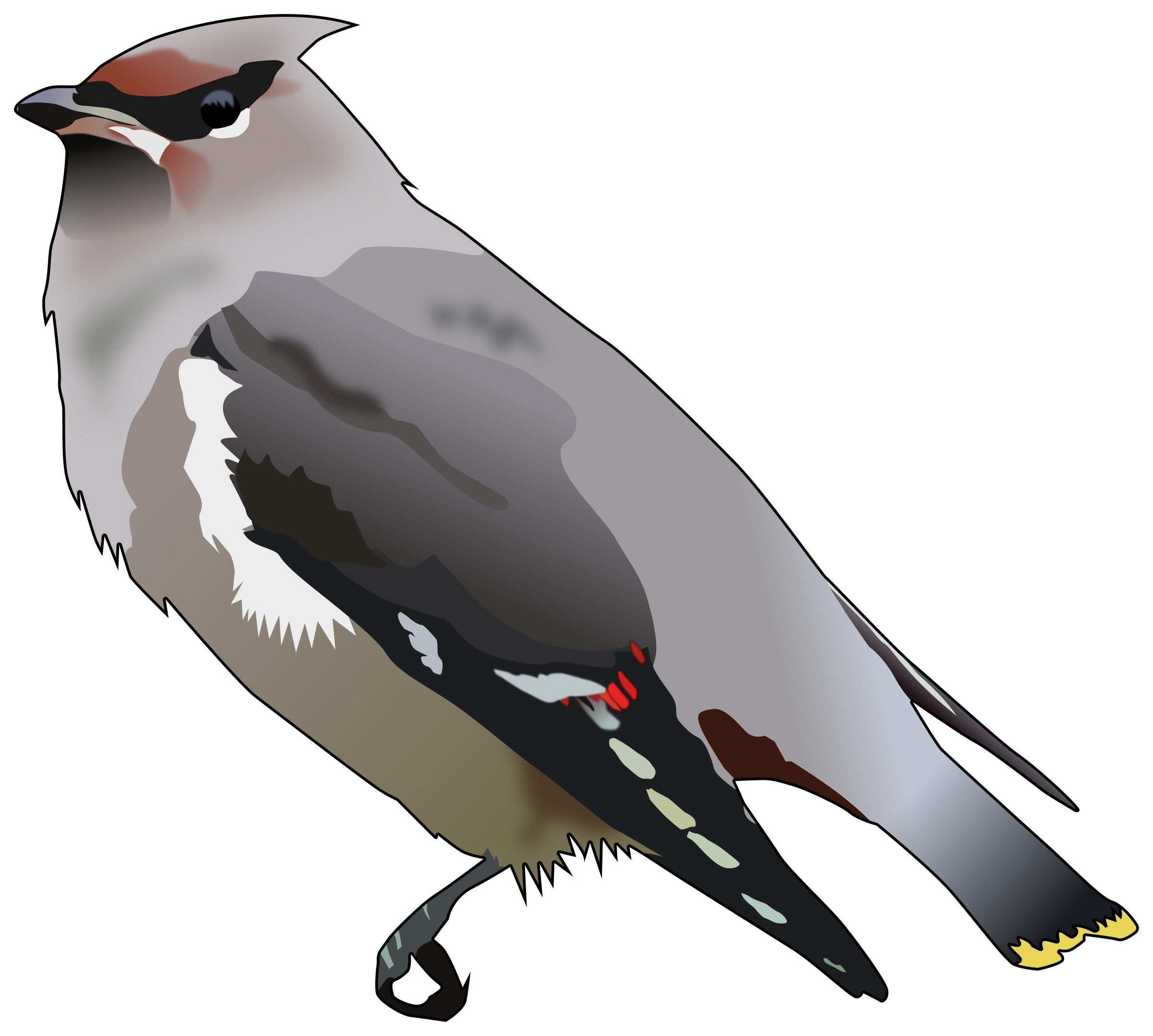 Waxwing clipart #4, Download drawings