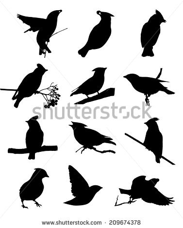Waxwing clipart #12, Download drawings