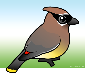 Waxwing clipart #14, Download drawings