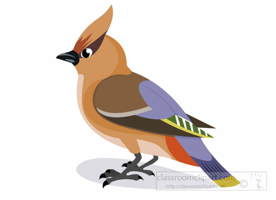 Waxwing clipart #1, Download drawings