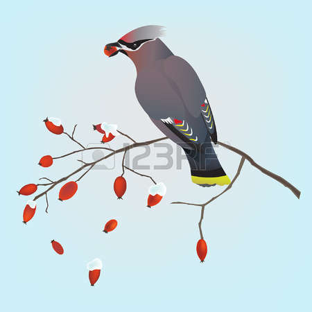 Waxwing clipart #11, Download drawings