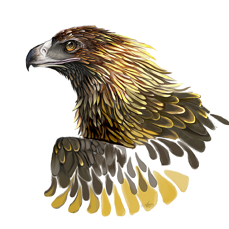 Wedge Tailed Eagle clipart #4, Download drawings