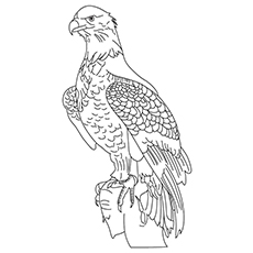 Wedge Tailed Eagle clipart #2, Download drawings
