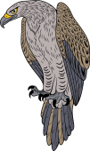 Wedge Tailed Eagle clipart #11, Download drawings