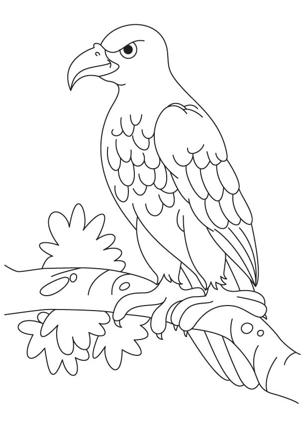 Wedge Tailed Eagle coloring, Download Wedge Tailed Eagle ...