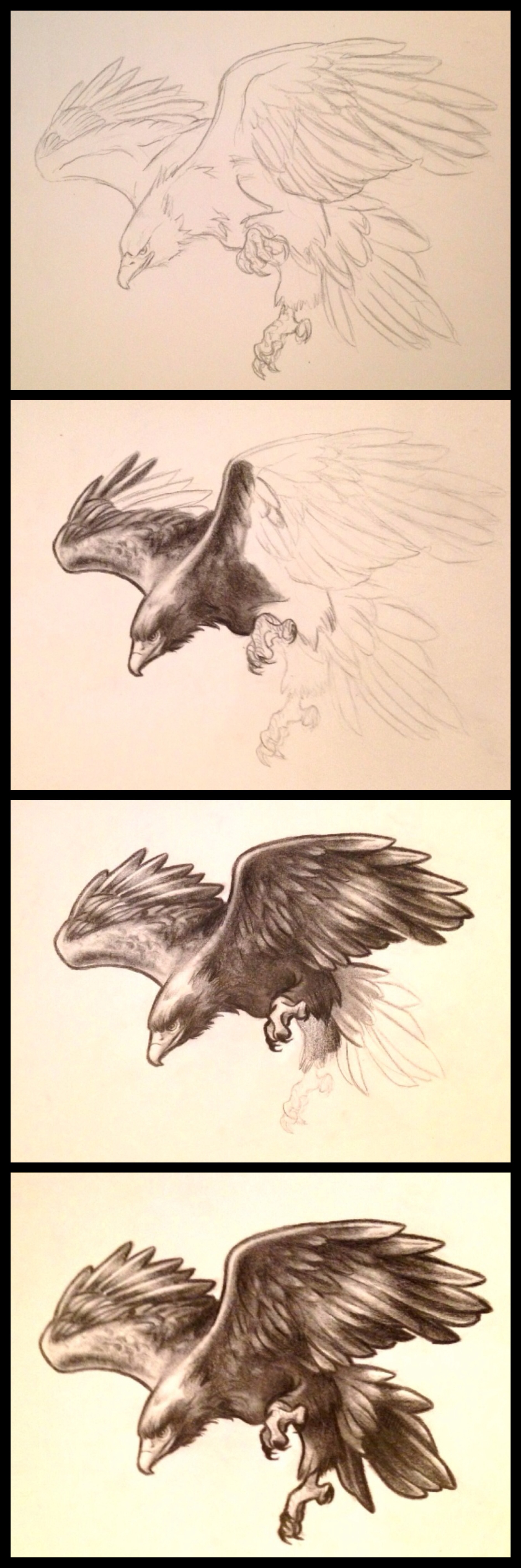 Wedge Tailed Eagle svg #1, Download drawings