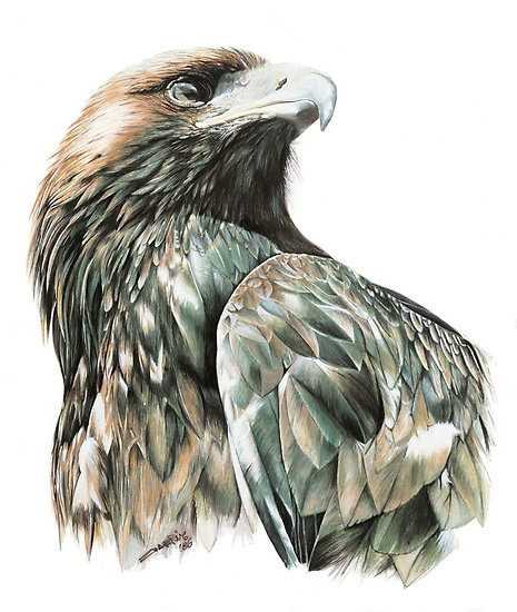Wedge Tailed Eagle svg #10, Download drawings