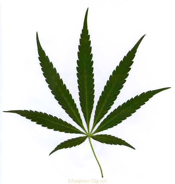 Weed clipart #3, Download drawings