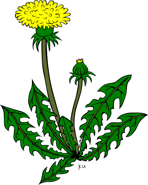 Weed clipart #6, Download drawings