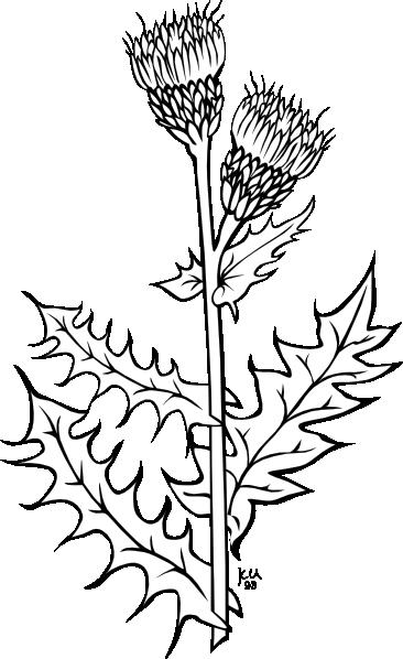 Weeds coloring #19, Download drawings