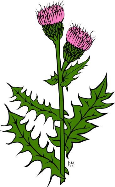 Weeds clipart #7, Download drawings