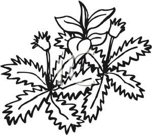 Weeds clipart #18, Download drawings
