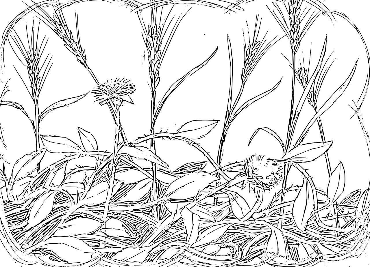 Weeds coloring #17, Download drawings