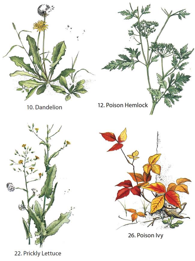 Weeds coloring #3, Download drawings