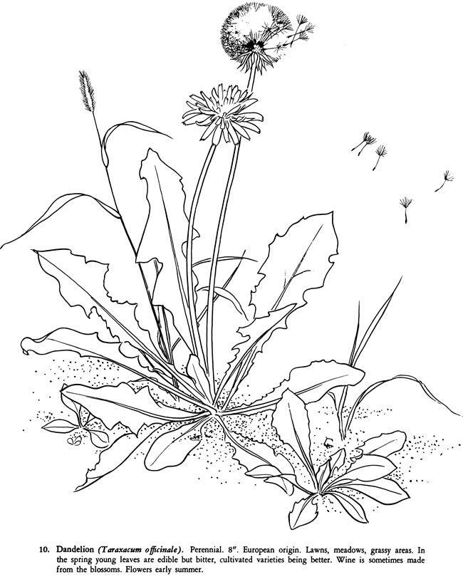 Weeds coloring #16, Download drawings