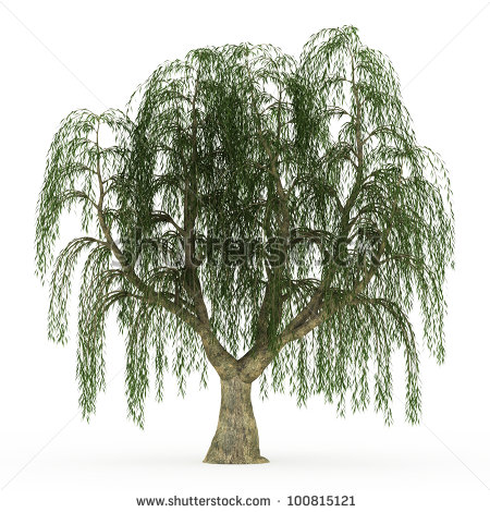 Weeping Willow clipart #15, Download drawings