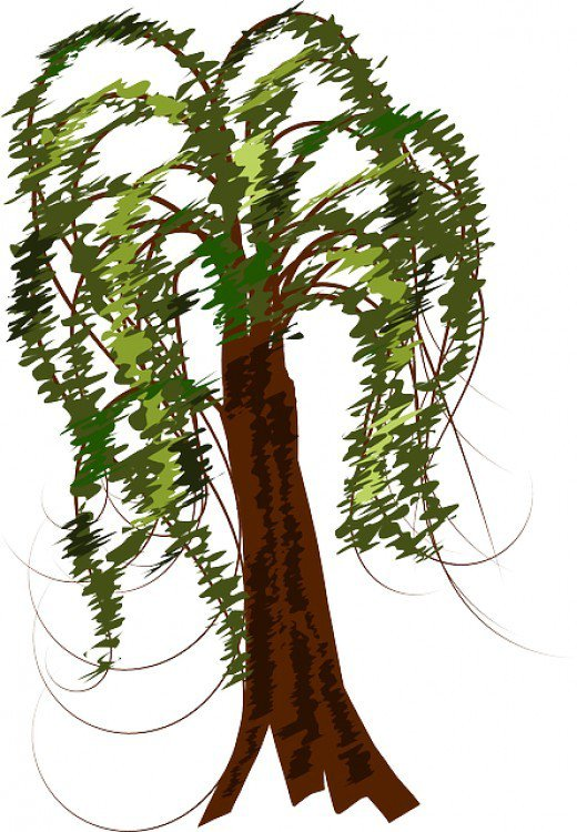 Weeping Willow clipart #14, Download drawings