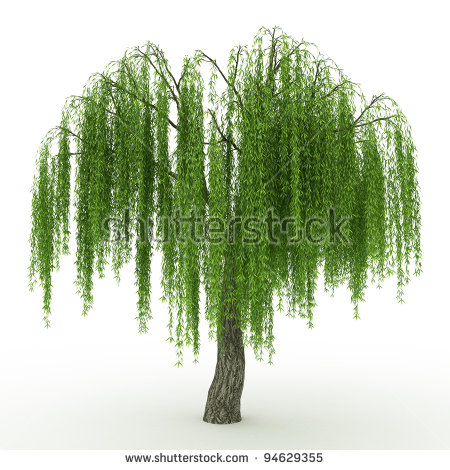 Weeping Willow clipart #9, Download drawings