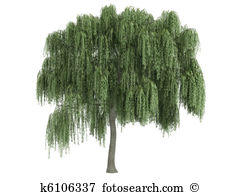 Weeping Willow clipart #20, Download drawings