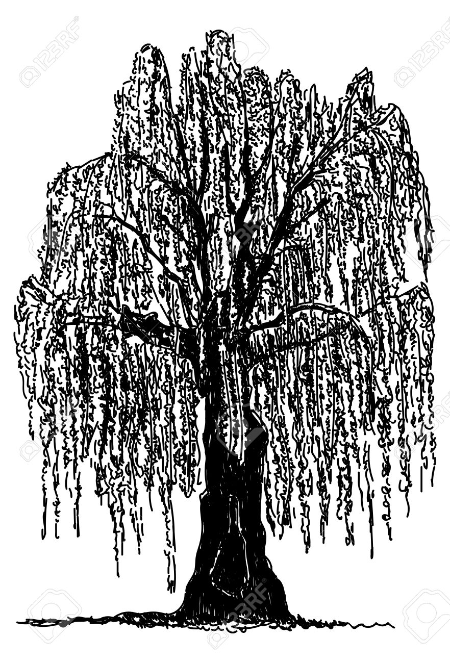 Weeping Willow clipart #4, Download drawings