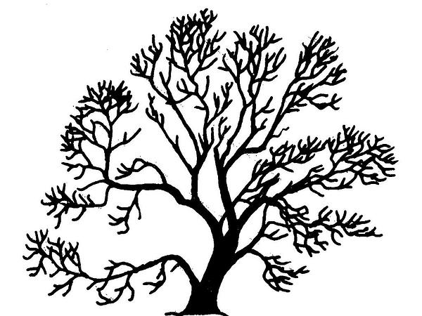 Weeping Willow clipart #6, Download drawings