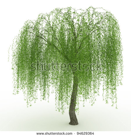 Weeping Willow clipart #18, Download drawings