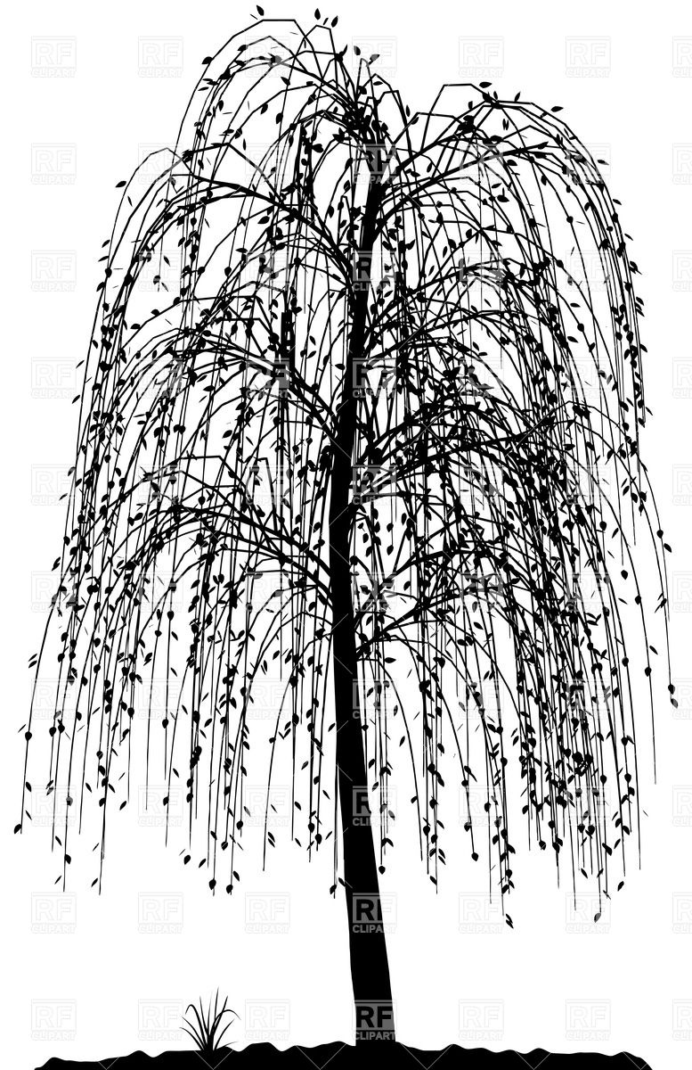 Weeping Willow coloring #5, Download drawings