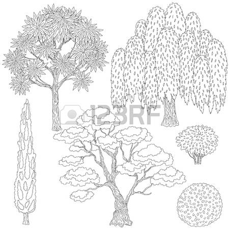 Weeping Willow coloring #15, Download drawings