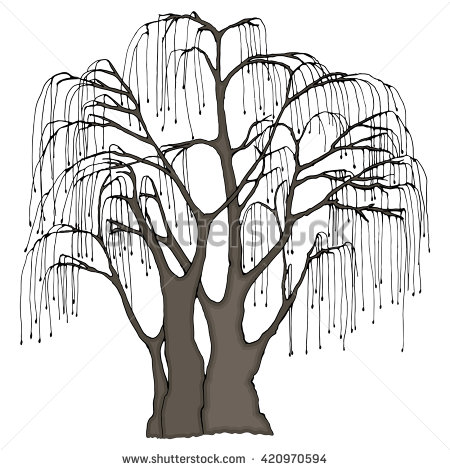 Weeping Willow coloring #13, Download drawings