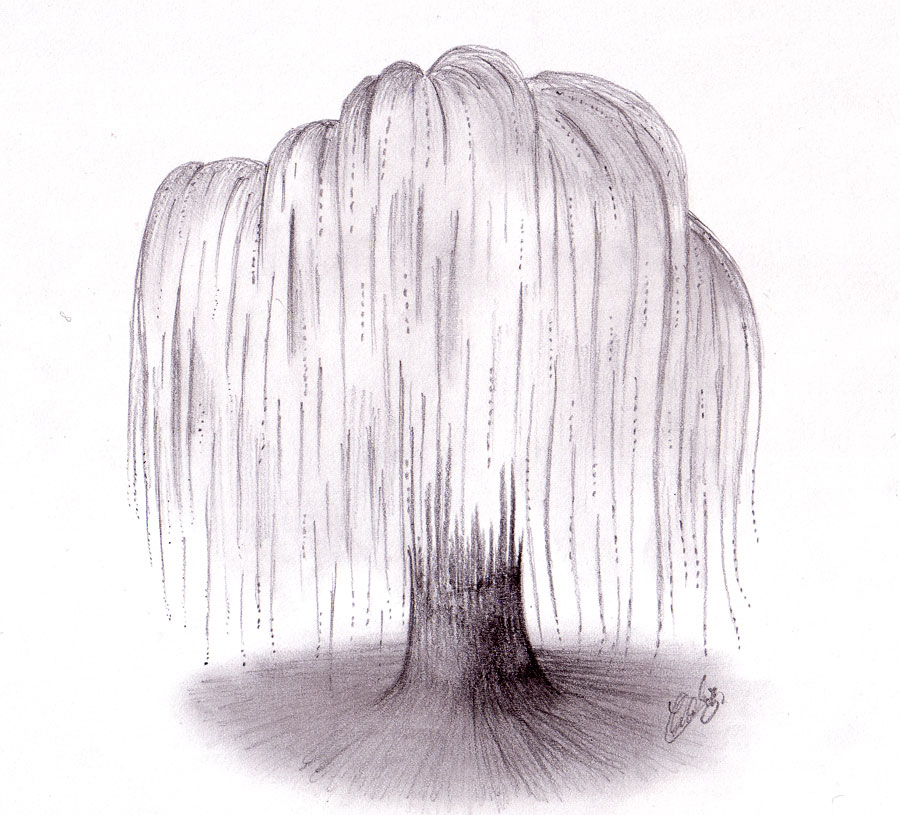 Weeping Willow coloring #14, Download drawings