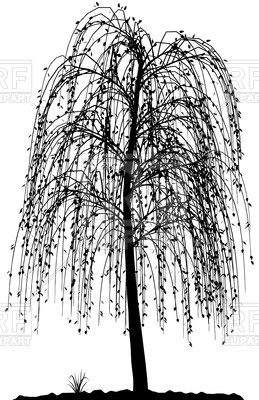 Weeping Willow svg #5, Download drawings