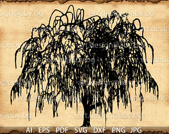 Weeping Willow svg #15, Download drawings