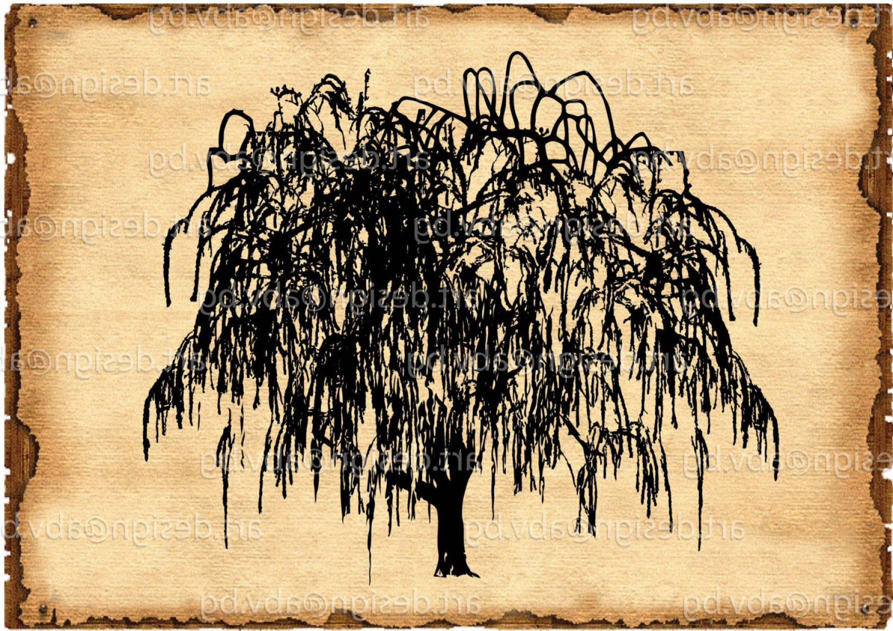 Weeping Willow svg #6, Download drawings