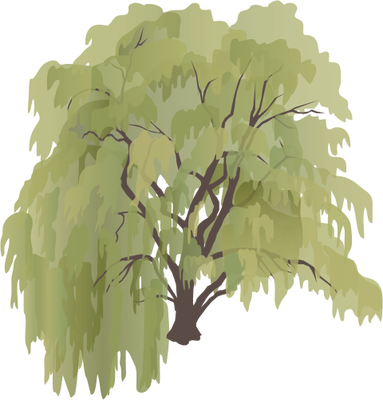 Weeping Willow svg #20, Download drawings