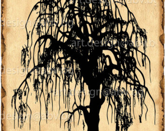 Weeping Willow svg #14, Download drawings