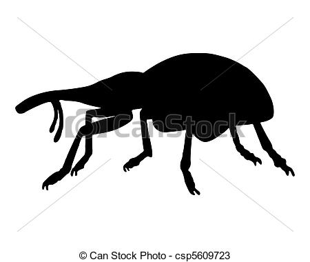 Weevil clipart #12, Download drawings