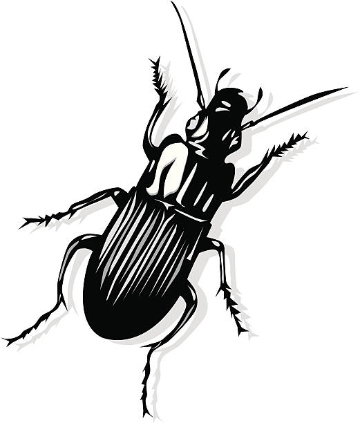 Weevil clipart #8, Download drawings