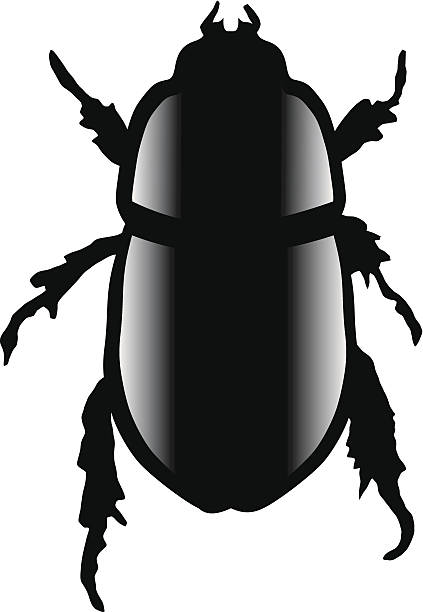 Weevil clipart #5, Download drawings
